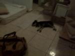 Primera noche, con el colchón en el suelo