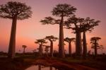 En Botswana, podremos dar la bienvenida al año nuevo bebiendo cava bajo un baobab.