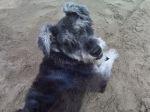 Le encanta la playa