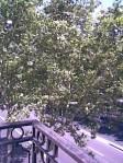 Desde el balconcito de Roxana, 2 de julio